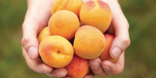 cottura frutta a bassa temperatura